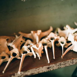 Animal bones on a shelf