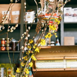 Witch hazel blossoms and pussy willows in a cafe